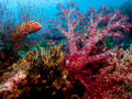 colourful-softcoral